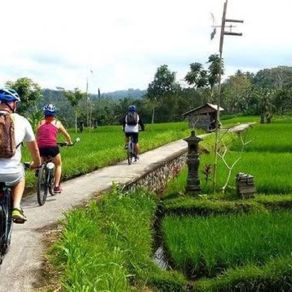 Cycling in ubud balisakti