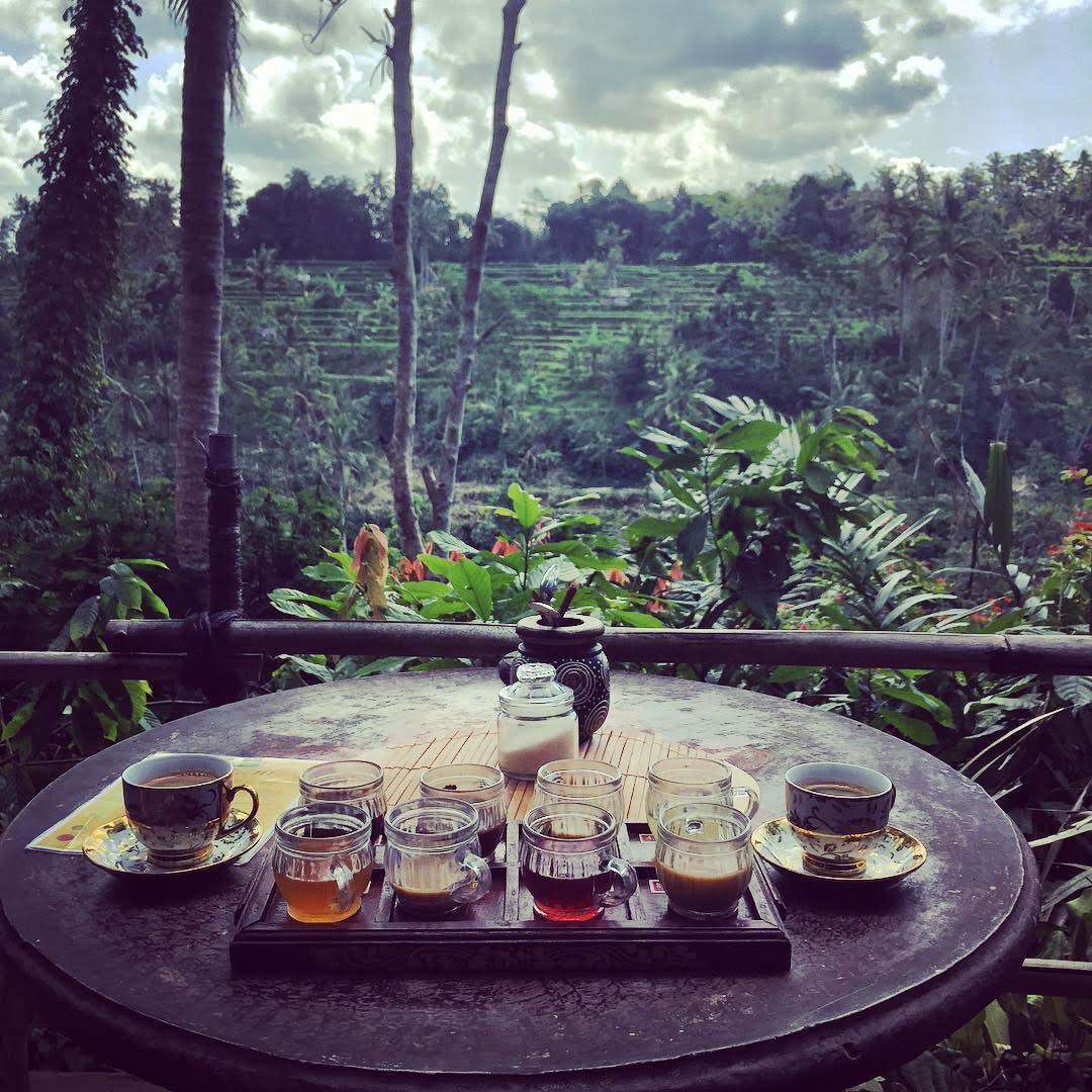 Waterfall Bali Jungle Swing And Ubud Tour Package