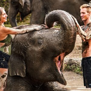 Elephant Mud Fun, Waterfall And Coffee Plantation